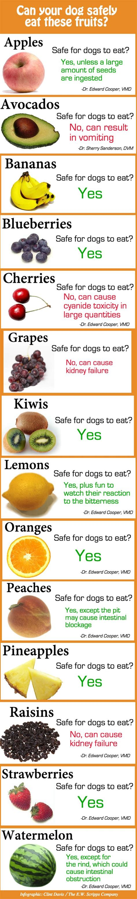 what fruits are for dogs all the fruits safe to with your in one chart a well for dogs and pets