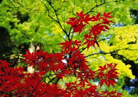 piante per giardino zen giardino zen le piante