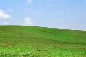 Green Horizon Landscaping meadow horizon sky perspective in focus