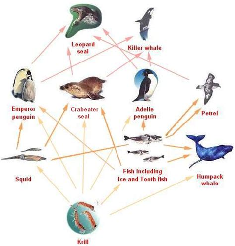 food chains webs gcse revision biology living things
