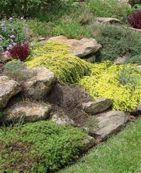 Rock Garden Perennials Faddegon S Nursery Latham Ny Rock Garden Perennials
