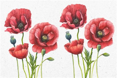 Vintage Poppies Wallpaper Murals Wallpaper