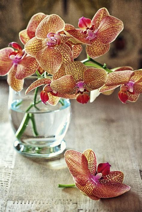 orchid color meaning what is the meaning of the orchid flower according to colour