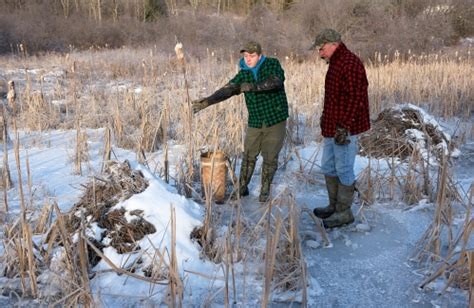 valley news carrying   vermont trapping tradition