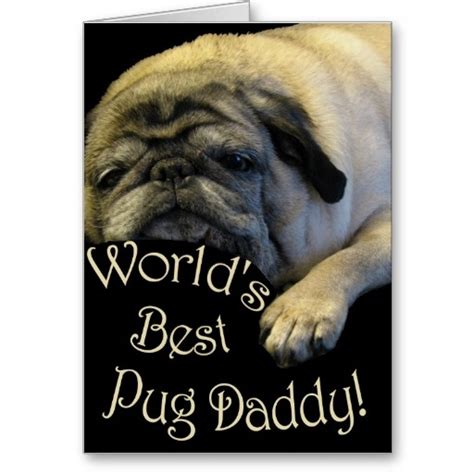 best pug wipes 17 best images about pugs on my best friend pug and pets