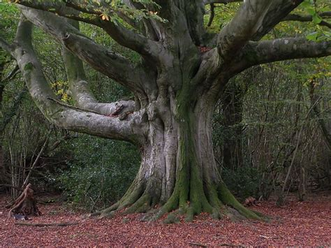 trees are channels for the divine spirit which one are you