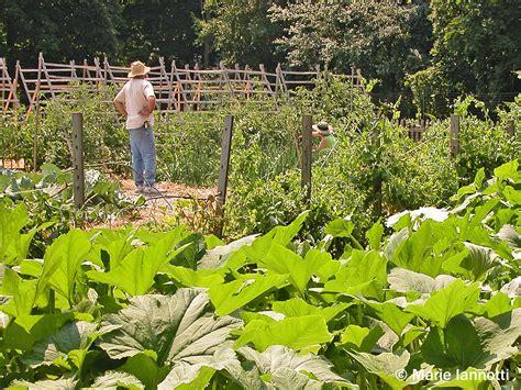 a vegetable garden from scratch 100 starting a vegetable garden from scratch how to