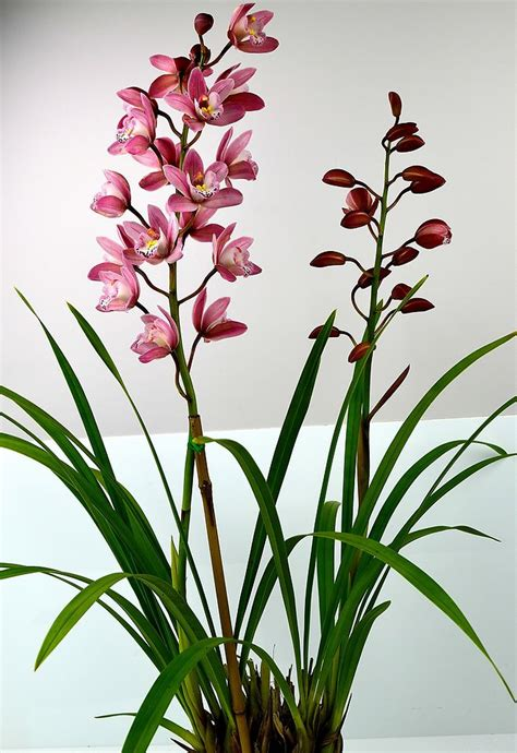 the complete guide to orchids favourite flower photos and