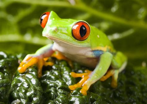 colorful frogs my colorful frogs hd wallpapers new tab theme mystart