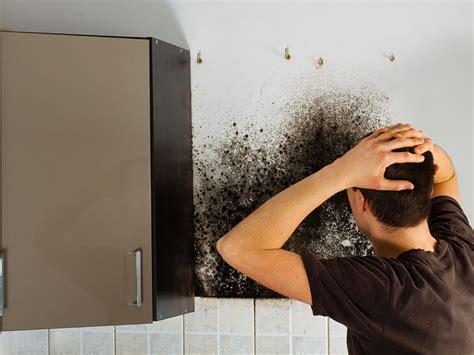 schimmel wohnung entfernen schimmel in der mietwohnung das ist zu tun immowelt at