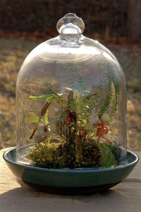 fairy terrarium terrarium my garden