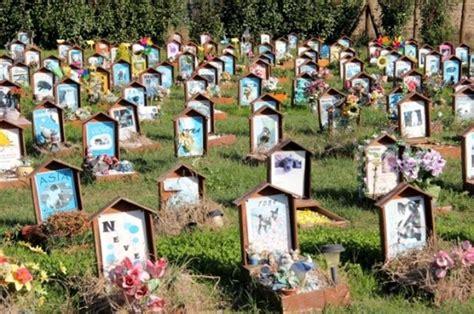 ladari di murano anche gorizia avr 224 il suo cimitero degli animali