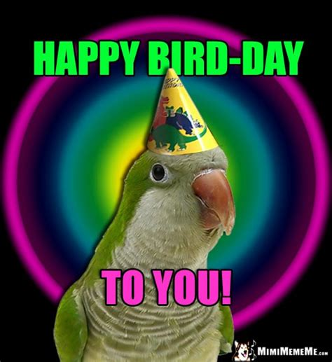 happy birthday bird images bird days are happy birthday bird humor hilarious
