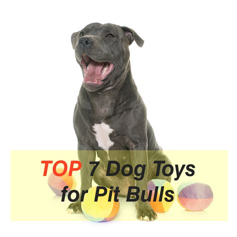 best toys for pitbull puppies discover the 7 best toys for pit bulls mysweetpuppy net