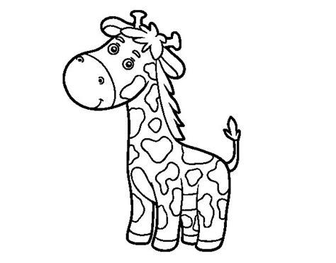 imagenes jirafas colorear dibujo de una jirafa para colorear dibujos net