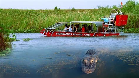 glass bottom boat tours everglades top 3 florida everglades activities