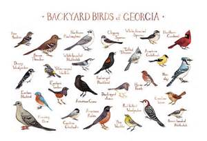 backyard birds field guide print watercolor