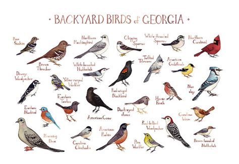 georgia backyard georgia backyard birds field guide art print watercolor