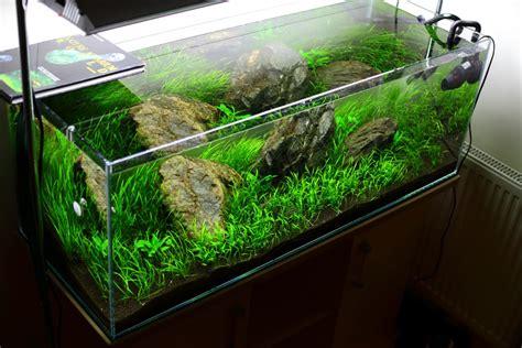 Aquascape Filters Algae Archives The Aquarium Plant Blog