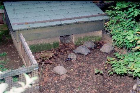 gabbia per tartarughe di terra gestione in cattivit 224 dei rettili