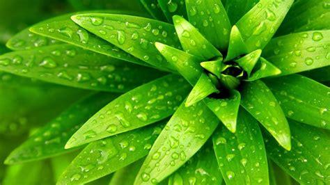 plant wallpaper water wallpaper plant hd desktop wallpapers 4k hd