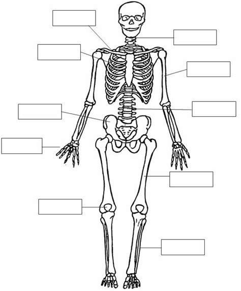 dibujo del aparato humano free sistema oseo coloring pages