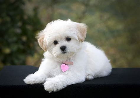 pictures of small dogs small breeds with m n o
