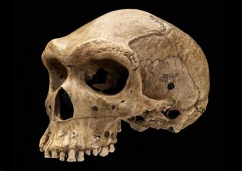 New Illuminati The Enigma Of The Prehistoric Skulls With Skull With Bullet