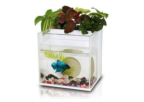 Fish Tank Planter A Dialogue Between Flowers And Fish Aquarium Planter Fish