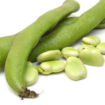 faba bean protein