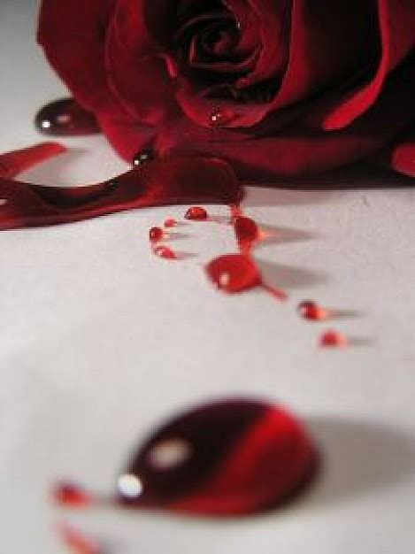 imagenes rosas sangrando 出血玫瑰8