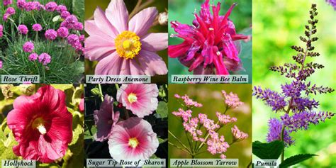 popular pink flowers for your garden blooms today