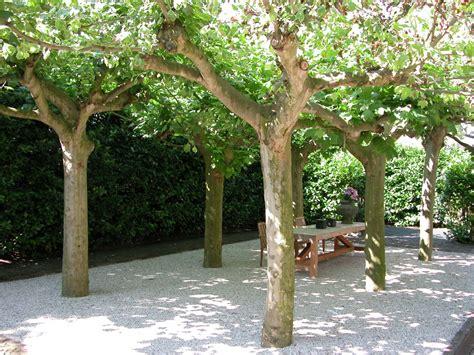 Boom Kleine Tuin by Bijzondere Bomen Voor Kleine Tuinen Lees De Mogelijkheden