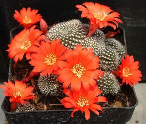 fiori arancioni nomi nomi piante grasse piante grasse quali sono i nomi