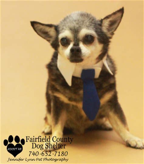 fairfield county shelter fairfield county shelter and adoption center lancaster ohio