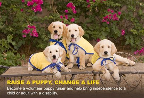 service puppy raiser pin by judy olmsted on cci service dogs