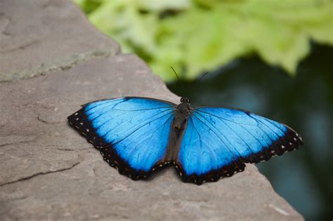 Botanischer Garten Augsburg Schmetterlinge 2016 Augsburg Roncallihaus Soll Abgerissen Werden Doch Es