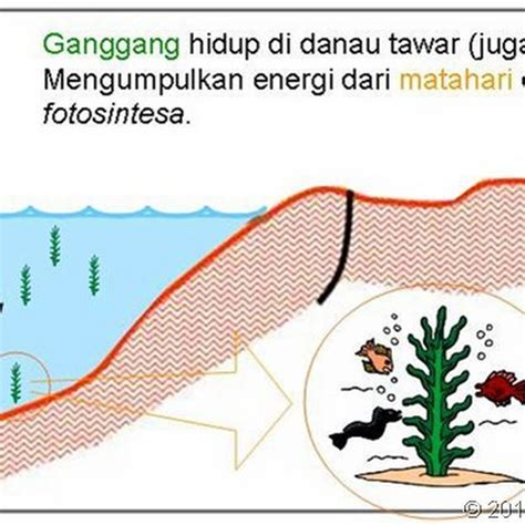 Minyak Bumi proses terbentuknya minyak bumi jangan di baca