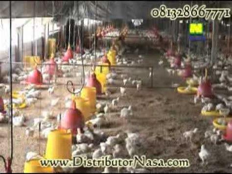 Viterna Untuk Budidaya Ayam Pedaging 500 Cc teknis budidaya ayam pedaging
