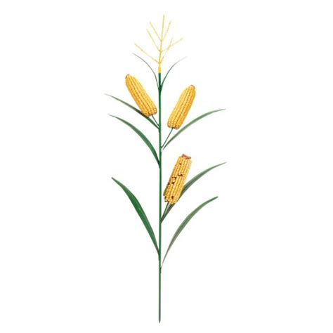 Links To Stalk 7 by Corn Stalk Coloring Page Cliparts Co