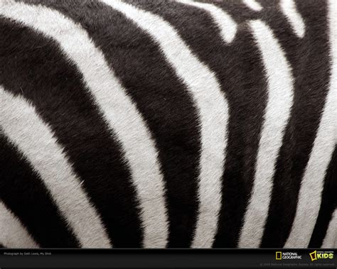 patterns in nature the analysis of species co occurrences zebra stripes