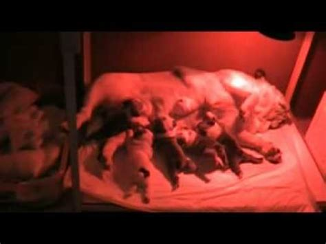puppy incubator puppies incubator for sale
