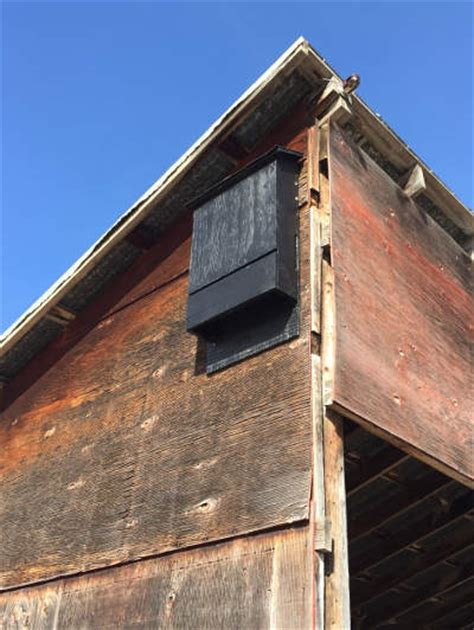 bat house alberta community bat program