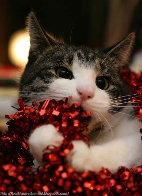 cute  funny pictures  animalschristmas