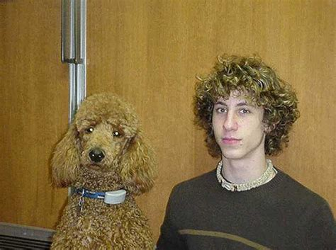 dogs that look like their owners dogs that look like their owners