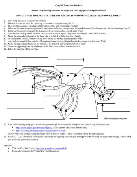 Crayfish Dissection Worksheet by Uncategorized Crayfish Dissection Worksheet