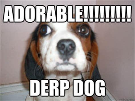 Derp Dog Meme - memes quickmeme