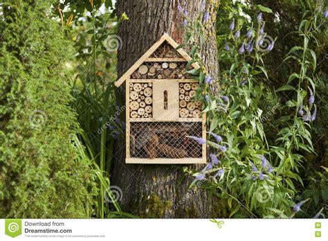 Wie Bekomme Ich Silberfische Weg by Insekten Im Haus Spannende Insekten Im Haus Bilder