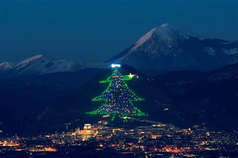 pope francis the world biggest christmas tree carlito