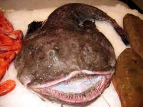 Monkfish is used whole with head to make a flavor more intensive